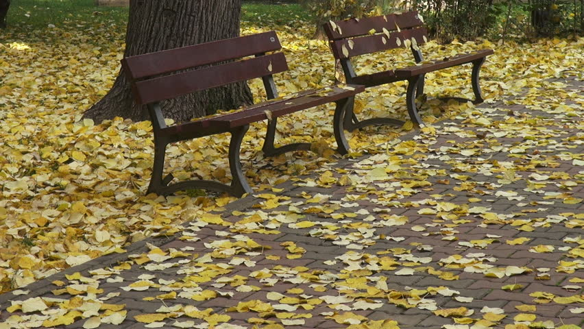 mood bench park leaves - photo #11