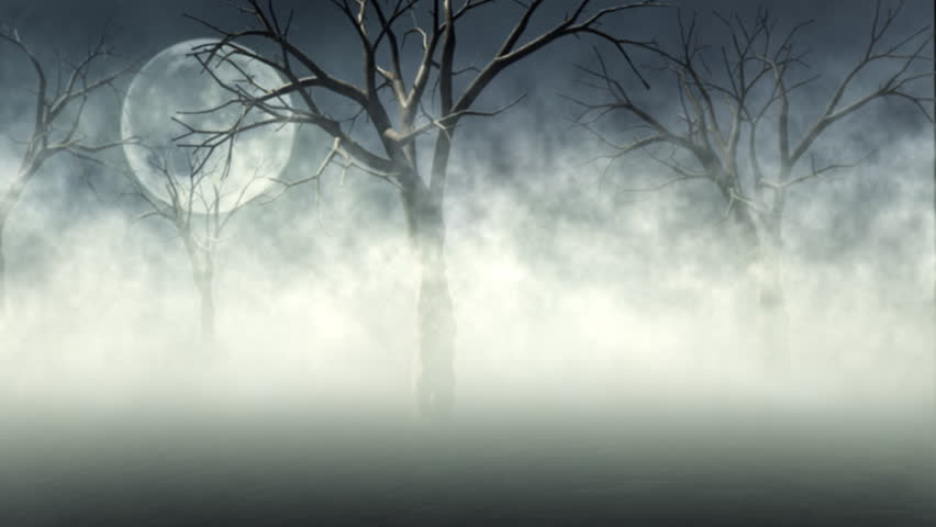 Woods in Fog - HD stock video clip