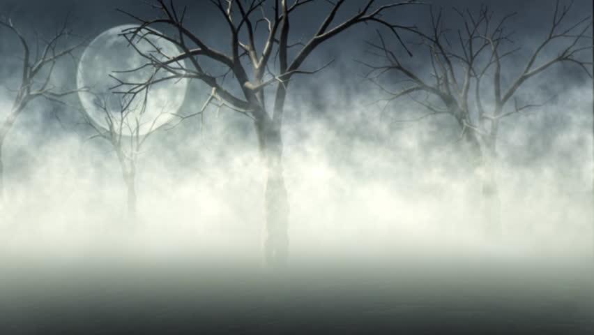 Woods in Fog - HD stock video clip