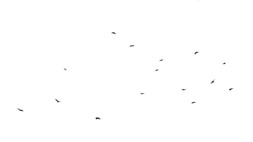 Raven Flock Birds Birds Flock Background of a