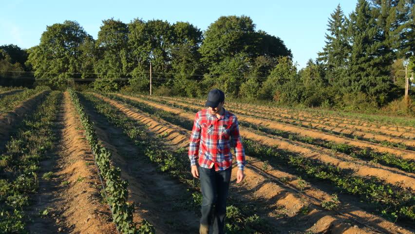 Farmer walking and looking at rows of crops