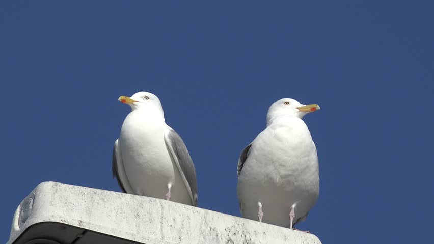 two seagulls standing on pole and one fly away
