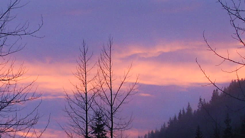 african sunset silhouette purple plum