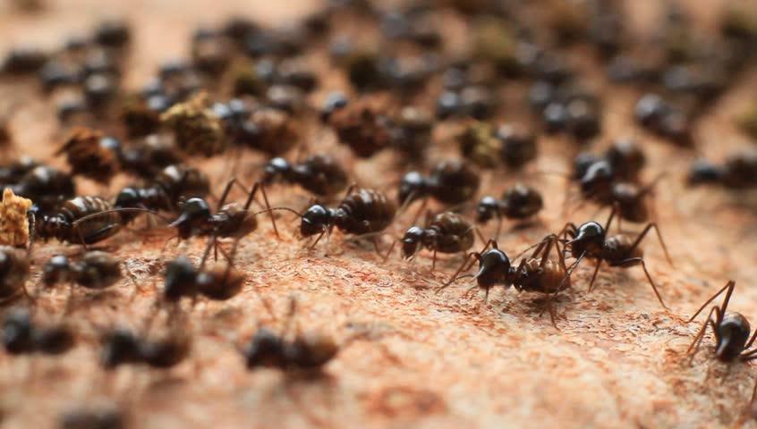 Crawling Termite Seamless loop. Teamwork Concept