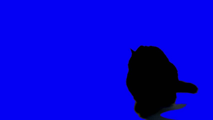 UHD footage of a black cat looking at and attacking the blue screen.