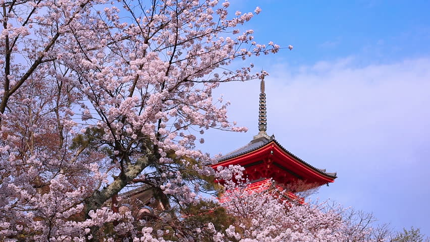 Pagoda with blue sky and cherry blossoms on the background. Japan, Kyoto, Kiyomizu Temple.