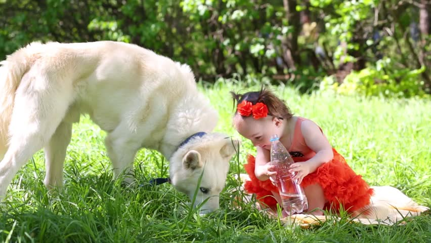 White dog husky drinks and little girl holds bottle in park