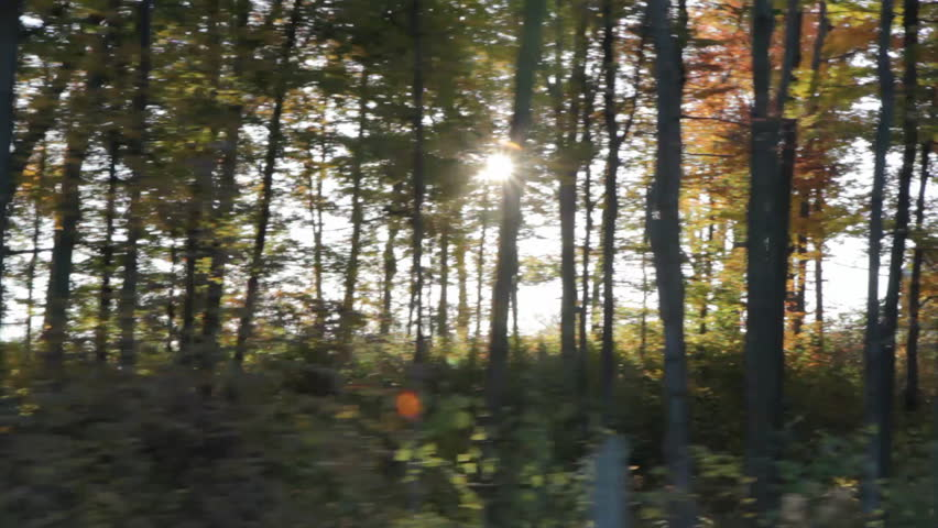 Driving past sunny trees. Morning sunshine coming through. Driving in rural Ontario. Ontario.